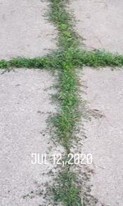 Weed Cross